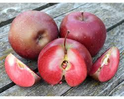 Jabloň zimná ´BAYA MARISA®´ podp. M9, kont. 7 L. zapestovaná. image
