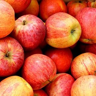 Jabloň skorá zimná ´SELENA®´ podp. M26, kont. 4L. image