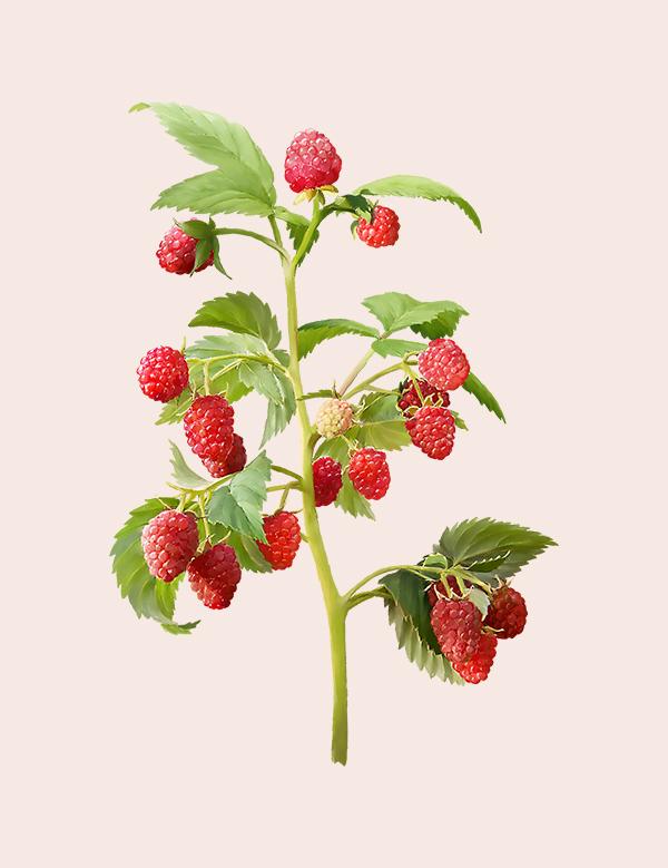 Drobné ovocie