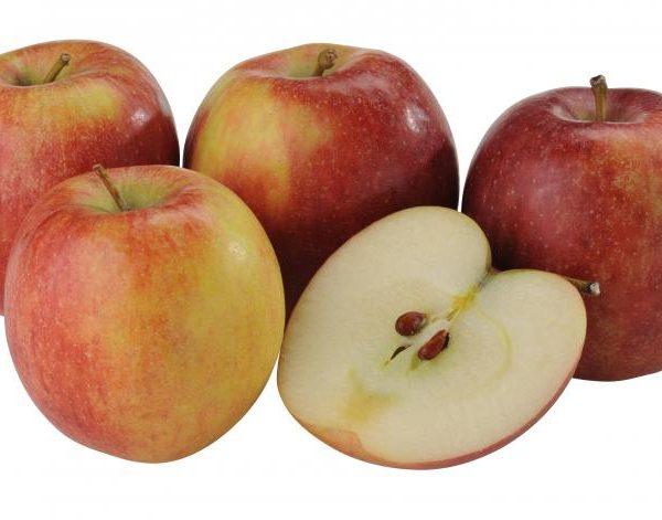 Jabloň zimná ´BRAEBURN´ podp. M26, 150 cm, voľnokorenná. image