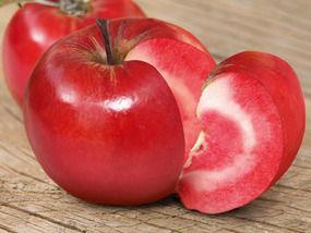 Jabloň jesenná neskorá stĺpovitá ´MARISA RUMENA´ podp. M7, voľnokorenná. 80-130 cm. image