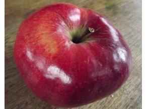 Jabloň skorá zimná ´MALINOVÉ HORNOKRAJSKÉ´ podp. A2, voľnokorenná. image